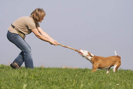 Stock Photo: 4279R-61576 woman - playing with half breed dog (Podenco Pointer) on meadow