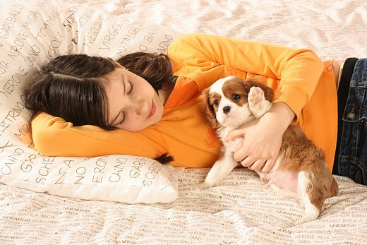 Stock Photo: 4279R-62277 girl with Cavalier King Charles Spaniel puppy - lying on a bed
