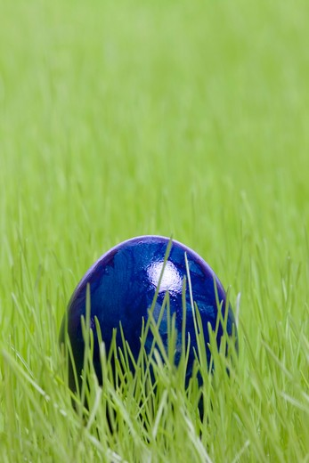 Easter, blue Easter egg in the grass : Stock Photo