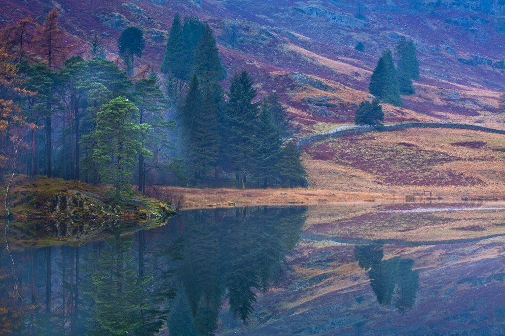 England, Cumbria, Blea Tarn. A misty dawn at Blea Tarn near Great Langdale in the Lake District. : Stock Photo