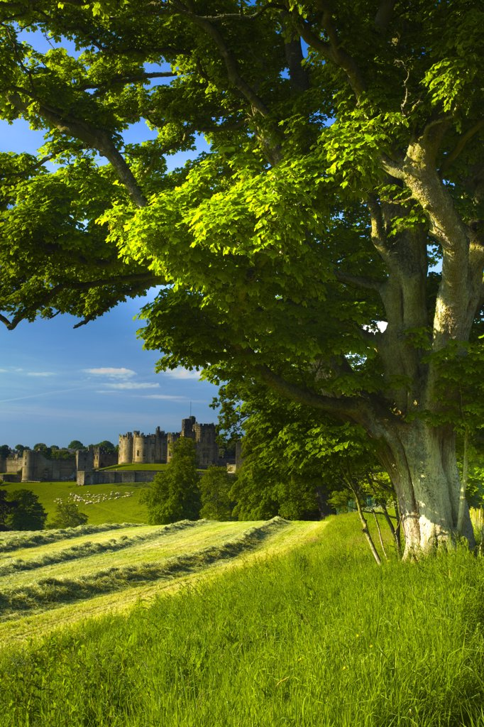 Stock Photo: 4282-13143 England, Northumberland, Alnwick. Alnwick castle viewed from farmland.