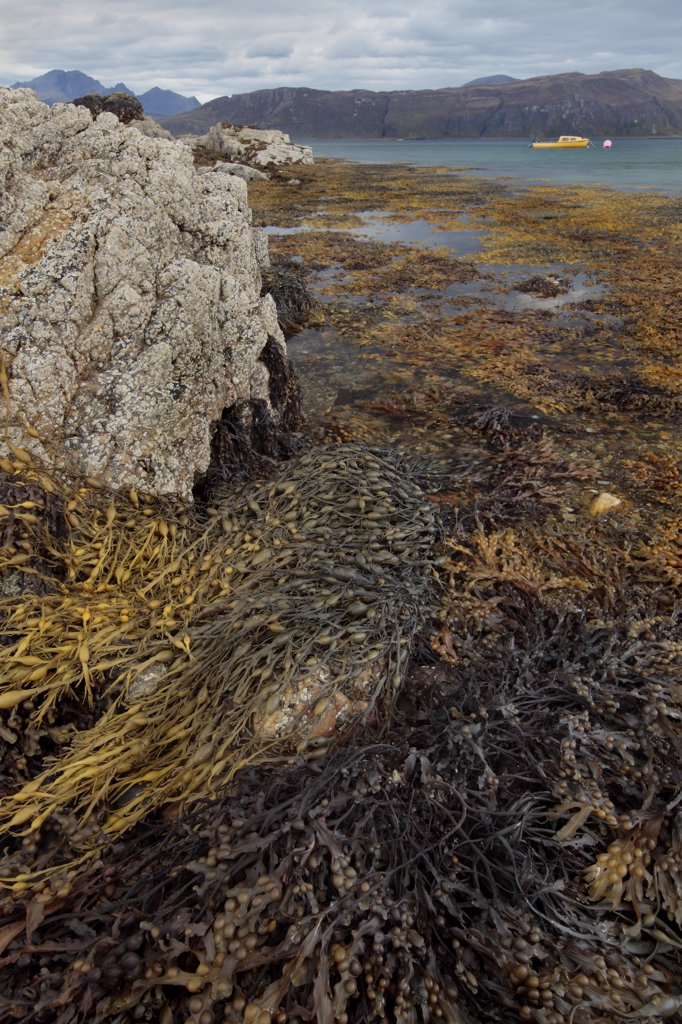 Stock Photo: 4282-13478 Scotland, Highland, Ord. View from a seaweed covered shore towards a small boat moored on Loch Eishort on the Isle of Skye.