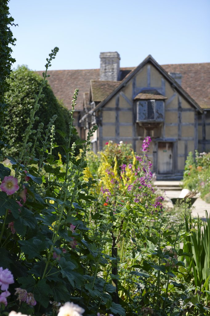 Stock Photo: 4282-1356 England, Warwickshire, Stratford-upon-Avon. William Shakespeare's Birthplace and Garden in Henley Street, the most famous and most visited literary landmark in Britain. The garden includes flowers, trees and herbs that were popular in Elizabethan England.
