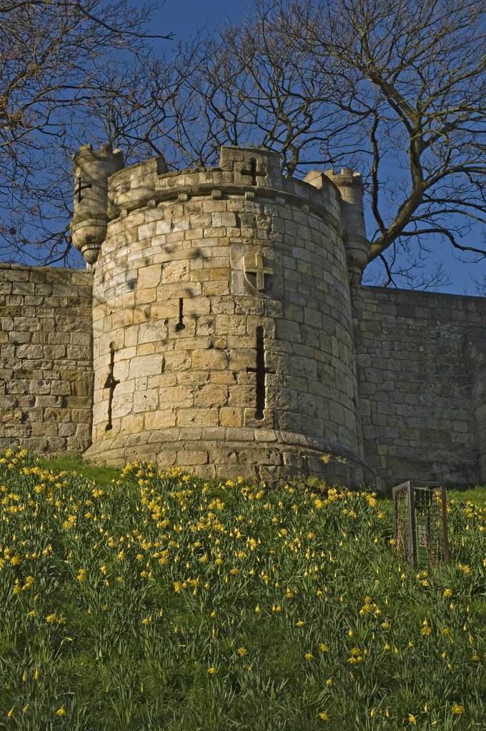 England, North Yorkshire, York. Tower on the York city walls between Monk Bar and Bootham Bar. : Stock Photo
