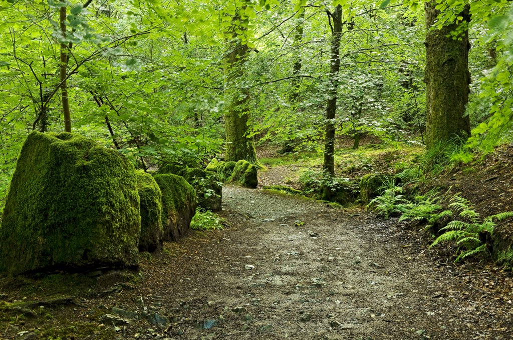 England, Cumbria, near Ambleside. Footpath leading up to Stockghyll Force near Ambleside. : Stock Photo