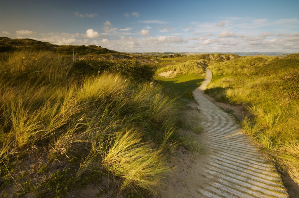Stock Photo: 4282-16139 England, Devon, Braunton Burrows. Wind blowing long grasses beside a wooden boardwalk amongst Braunton Burrows dunes on the North Devon coast.