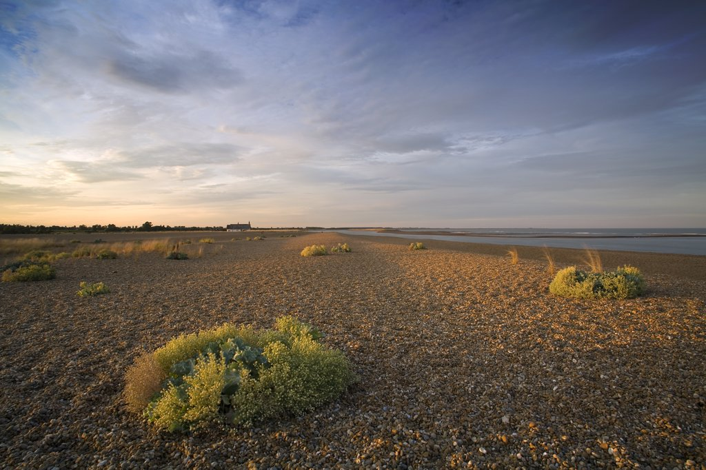 England, Suffolk, Orford. A view over Shingle Street which is south of Orford. The area is a designated SSSI site due to the rare flora that can be found growing amongst the shingle on the wind-swept beach. : Stock Photo