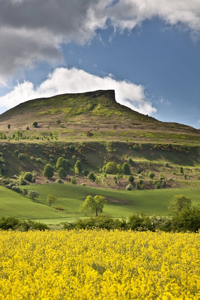 Stock Photo: 4282-17424 England, Redcar & Cleveland, Pinchinthorpe. Oilseed Rape field at Pinchinthorpe looking towards Roseberry Topping, a distinctive hill the shape of which is often compared to the Matterhorn.