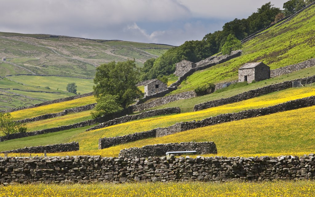 Stock Photo: 4282-17442 England, North Yorkshire, near Muker. Traditional drystone walls and stone barns in Swaledale near Muker, in the Yorkshire Dales National Park.