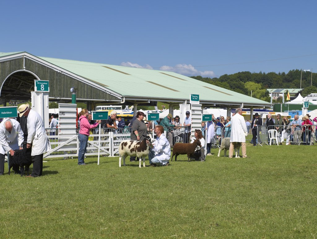 Stock Photo: 4282-18815 England, North Yorkshire, Harrogate. Judging sheep at the Great Yorkshire Show.