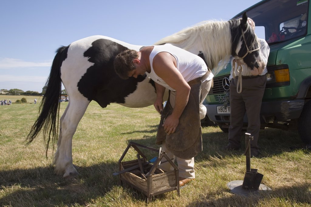 North Wales, Anglesey, Pentraeth. Farrier shoeing a piebald pony at Pentraeth Country Fayre. : Stock Photo