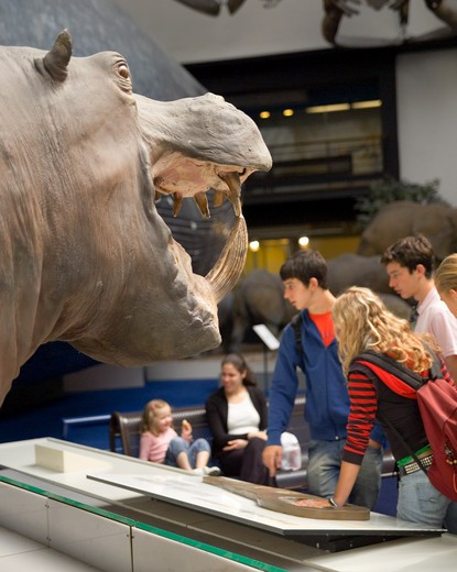 England, London, South Kensington. Visitors study the exhibits inside the Natural History Museum. : Stock Photo