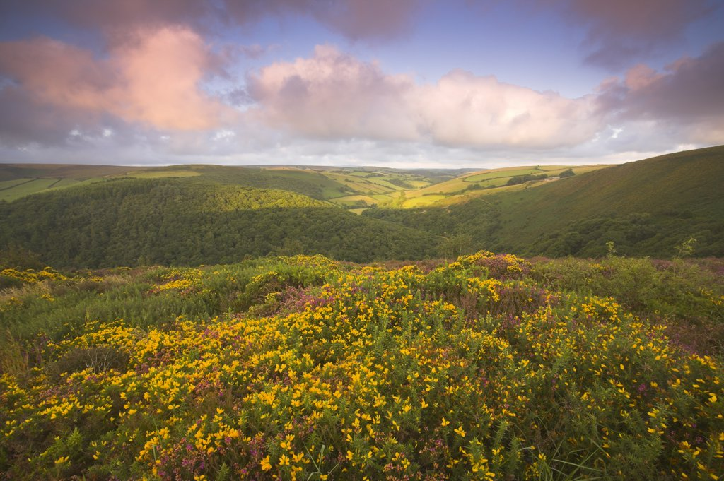 England, Somerset, County Gate. View from County Gate just after dawn on the Somerset/ Devon border within Exmoor National Park. : Stock Photo