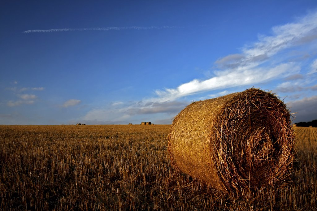 Stock Photo: 4282-21128 England, North Yorkshire, York. Blue skies over round hay bales on harvested fields in North Yorkshire.