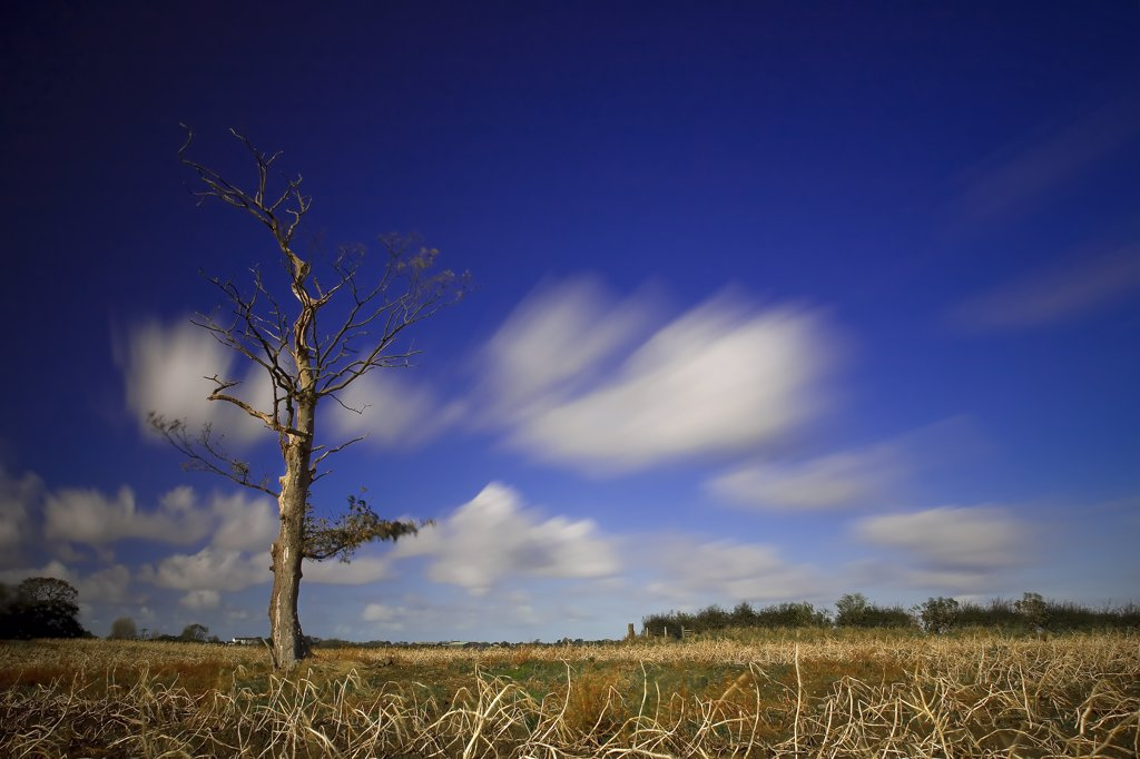 Stock Photo: 4282-21158 England, Oxfordshire, Oxford. Blue skies over a leafless tree and field Oxford.