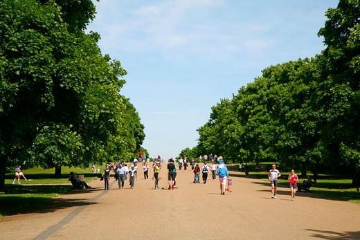 England, London, Kensington Gardens. The Broadwalk in Kensington Gardens. : Stock Photo