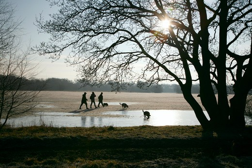 England, London, Wimbledon Common. Dog walkers on a frosty Wimbledon Common. : Stock Photo