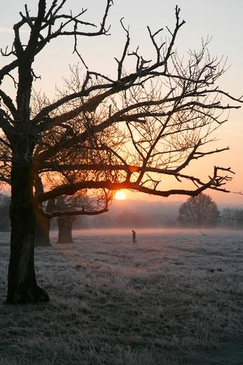England, London, Richmond Park. Sunrise over a frosty Richmond Park. : Stock Photo