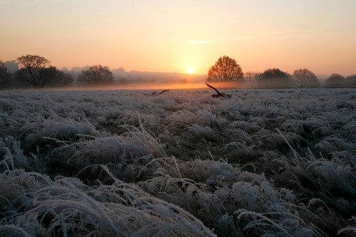 England, London, Richmond Park. Sunrise over a frosty Richmond Park. : Stock Photo