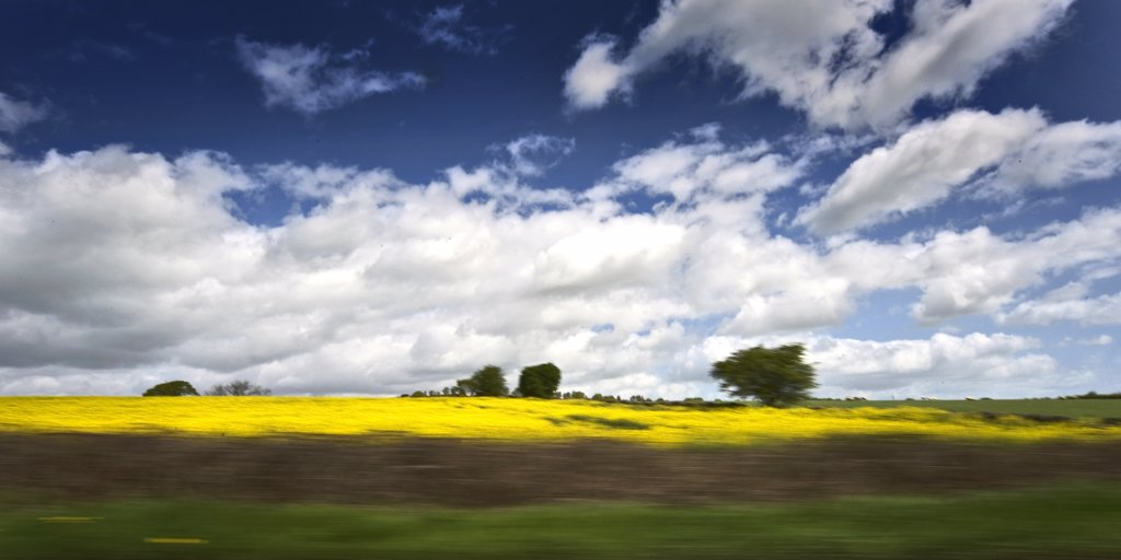 England, Hertfordshire, Whitwell. A view of a rapeseed field from a moving vehicle. Prospects for UK grown rapeseed have never looked better with the crop increasingly in demand for both edible and biodiesel markets. : Stock Photo