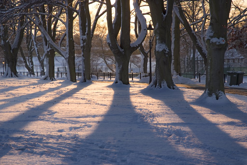 England, Surrey, Epsom. Long shadows from trees over snow covered ground in low evening light. : Stock Photo