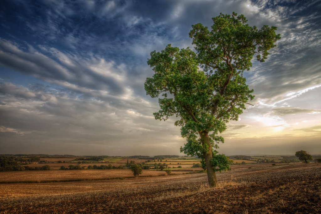 Stock Photo: 4282-27519 England, Nottinghamshire, Nottingham. A single tree on a hillside in rural Nottinghamshire.