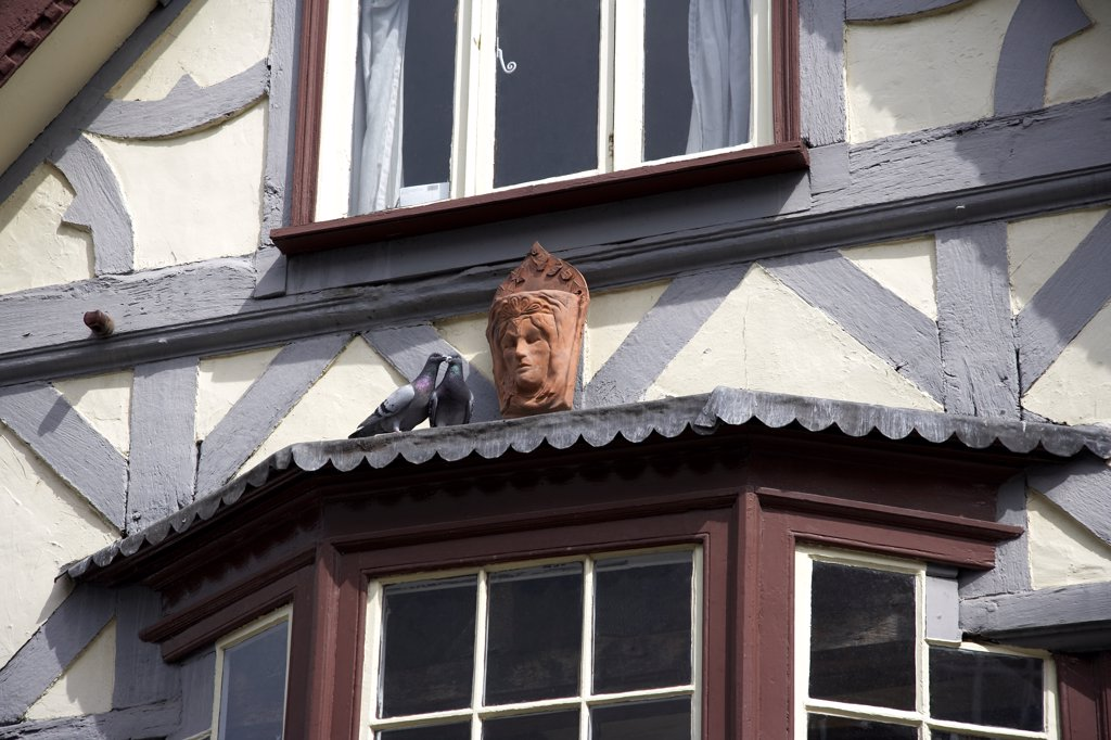Stock Photo: 4282-27997 England, Herefordshire, Leominster. Pigeons on a window ledge of a cottage in Leominster.