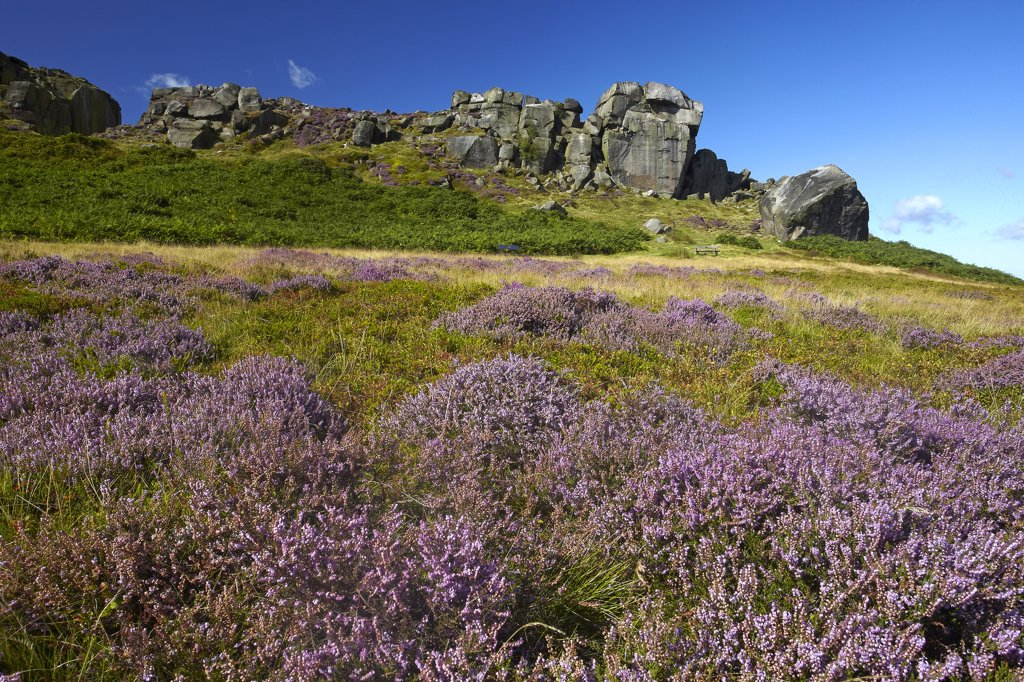 England, West Yorkshire, Ilkley Moor. The Cow and Calf, a large rock formation consisting of an outcrop and boulder, also known as Hangingstone Rocks, at Ilkley Quarry. : Stock Photo
