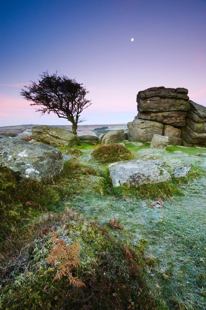 Stock Photo: 4282-29633 England, Devon, Saddle Tor. Moon over rock formations and a Hawthorn tree on Saddle Tor in Dartmoor National Park.