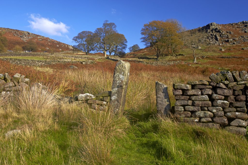 Stock Photo: 4282-29851 England, Derbyshire, Curbar. Path through drystone wall leading up to the gritstone escarpment of Baslow Edge above the village of Curbar in the Peak District National Park.