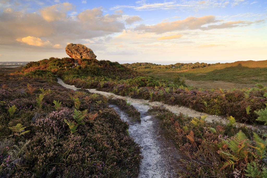 England, Dorset, Studland. Evening light at Agglestone Rock, a large sandstone rock on Studland Heath. : Stock Photo