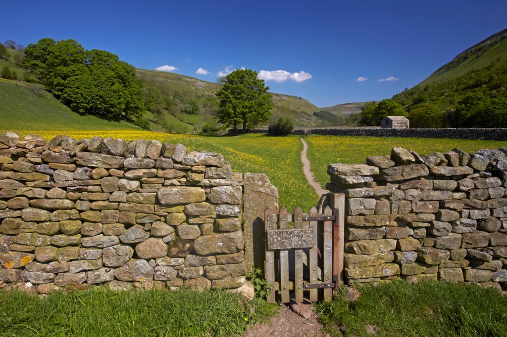 England, North Yorkshire, Muker. Gate leading through drystone wall to early summer buttercup meadows in Swaledale. : Stock Photo