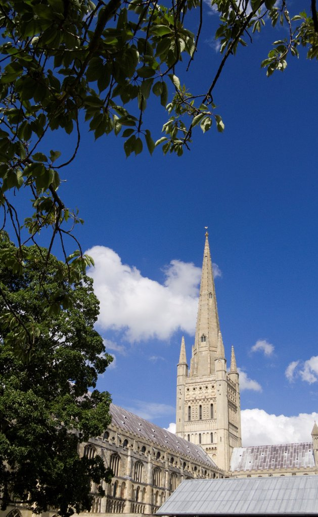 England, Norfolk, Norwich. The medieval Cathedral of Norwich framed by a tree. : Stock Photo