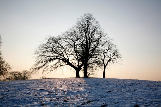 Stock Photo: 4282-32704 England, London, Hampstead Heath. Trees silhouetted against the morning sun in the middle of a snowbound Hampstead Heath.