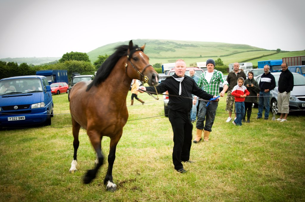 Stock Photo: 4282-32870 Wales, West Glamorgan, Llanrhidian. A horse is offerd for sale at a welsh horse fair.