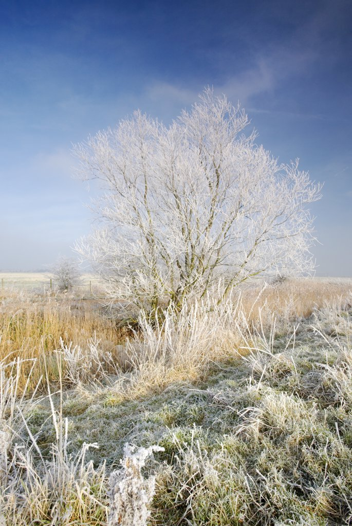 England, Norfolk, near Horning. Frozen Marsh land close to St Benets Abbey on the Norfolk Broads following a winter Hoarfrost. : Stock Photo