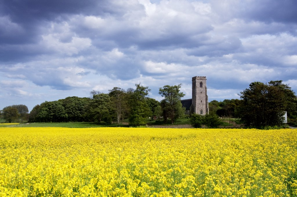 Stock Photo: 4282-4079 England, Suffolk, Henstead. View over a field of bright Oilseed Rape towards St Mary's church in Henstead.