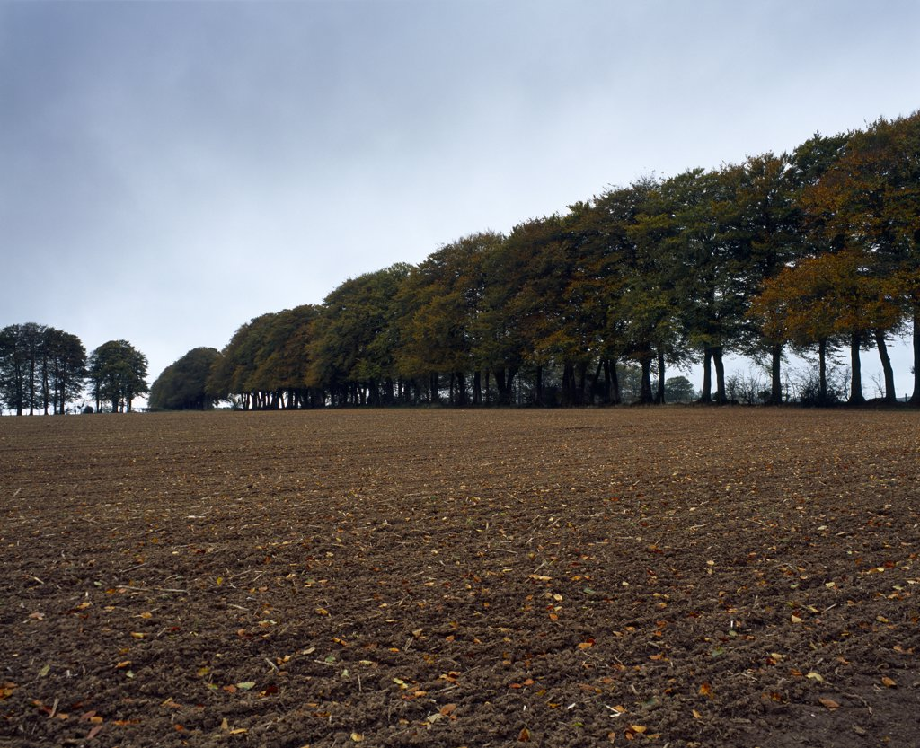 England, Somerset, Wells. A ploughed field in Autumn at Whitnell Corner on the Mendip Hills near Wells. : Stock Photo