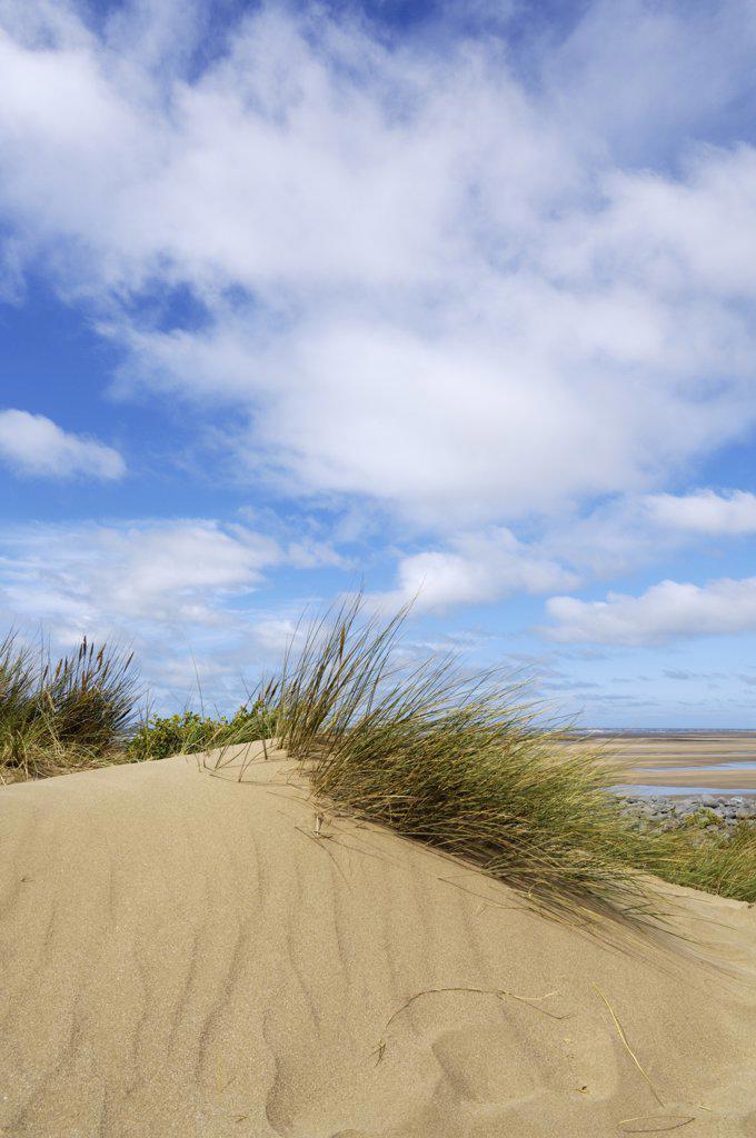 Stock Photo: 4282-5033 England, Devon, Westward Ho!. Sand dunes at Northam Burrows on the South West Coast Path near Westward Ho!.
