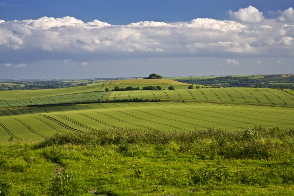 England, Wiltshire, near Alton Barnes. View across the North Wessex Downs towards Woodborough Hill in the middle of Pewsey Vale. : Stock Photo