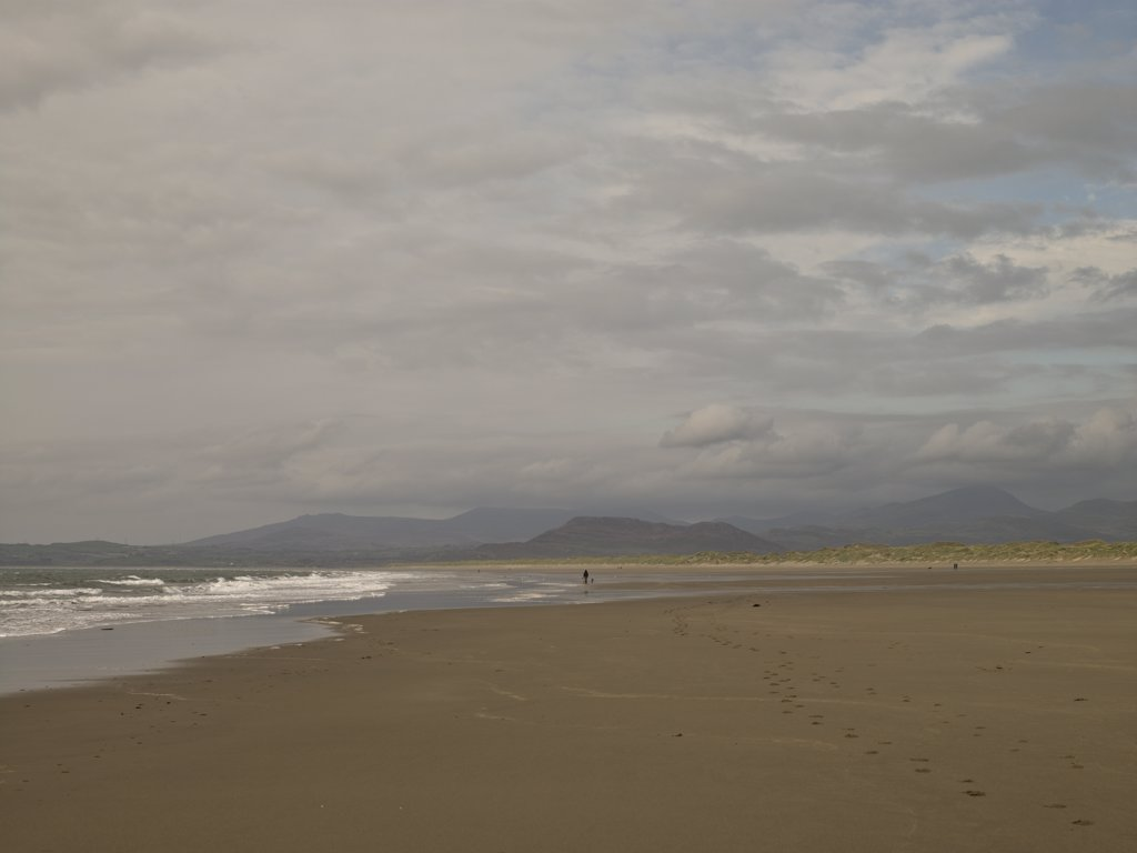 Wales, Gwynedd, Harlech. Dog walking along the sandy beach at Harlech. : Stock Photo