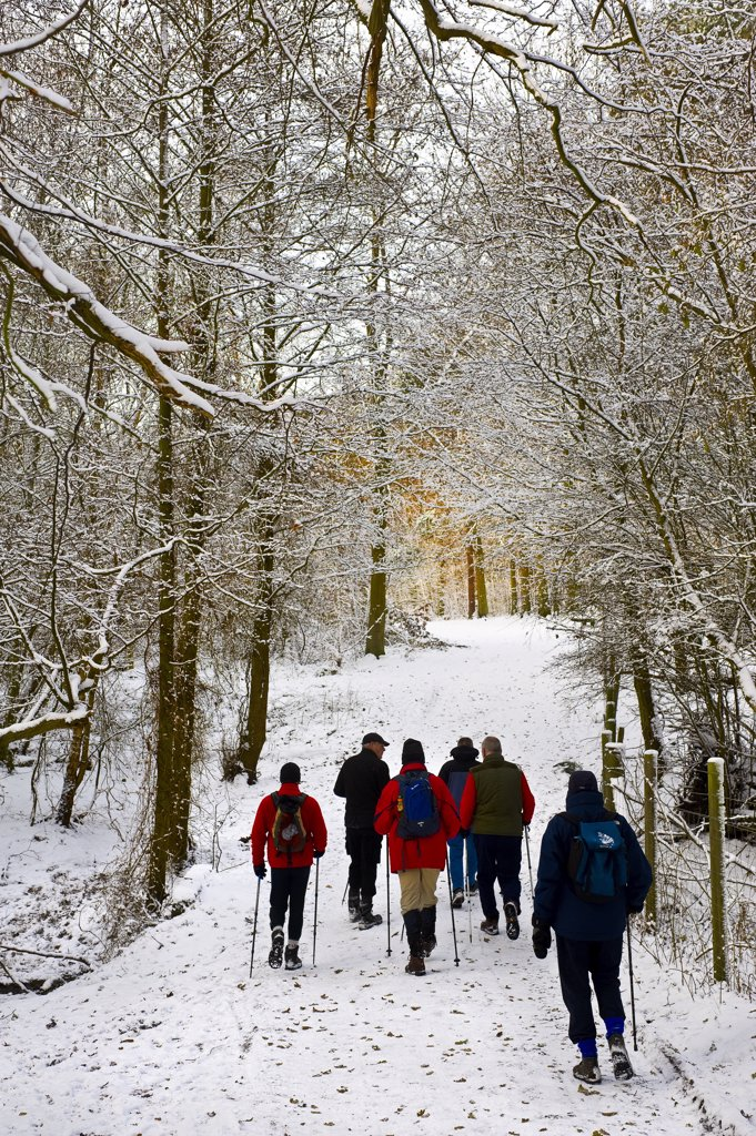 England, Essex, Brentwood. Ramblers walking on a snow covered path in woodland. : Stock Photo