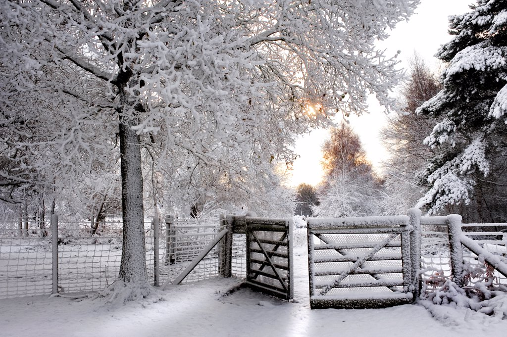 England, Essex, Brentwood. Heavy snowfall in a woodland. : Stock Photo