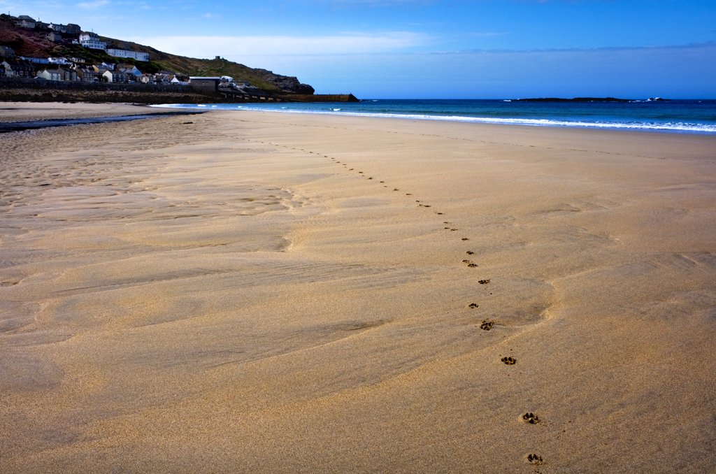 England, Cornwall, Sennen. Paw prints in the sand on Sennen Beach. : Stock Photo
