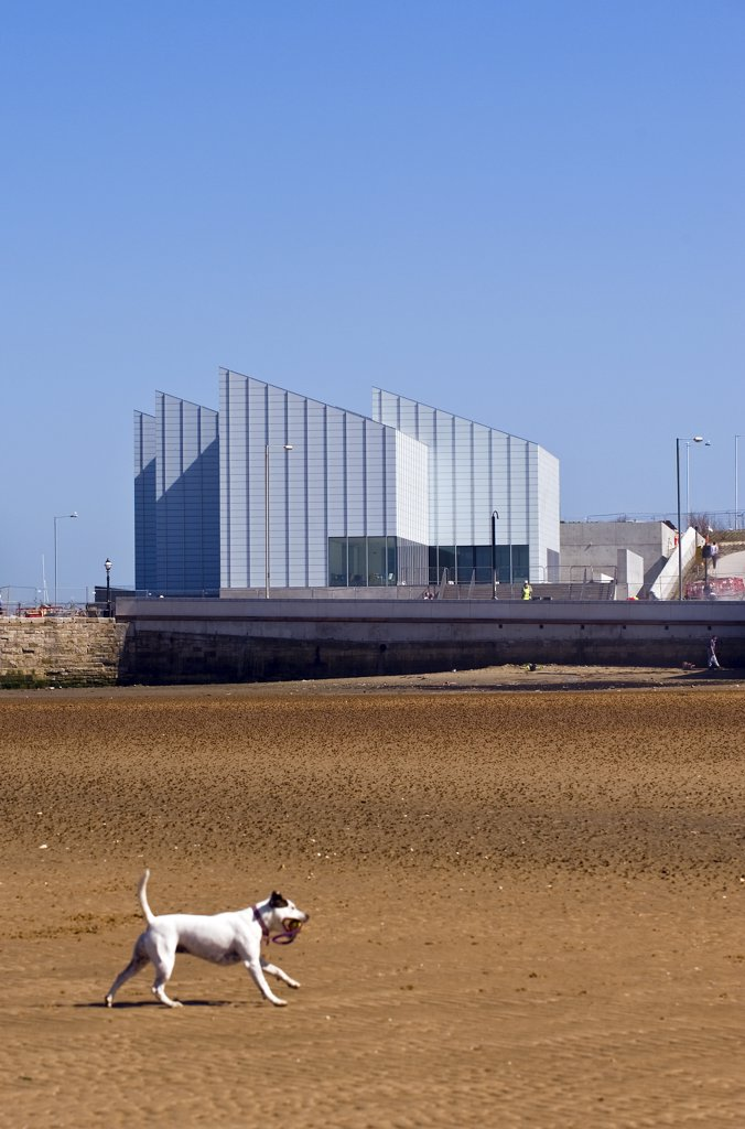 Stock Photo: 4282-8745 England, Kent, Margate. A dog running on Margate beach with the Turner Contemporary arts gallery in the background.