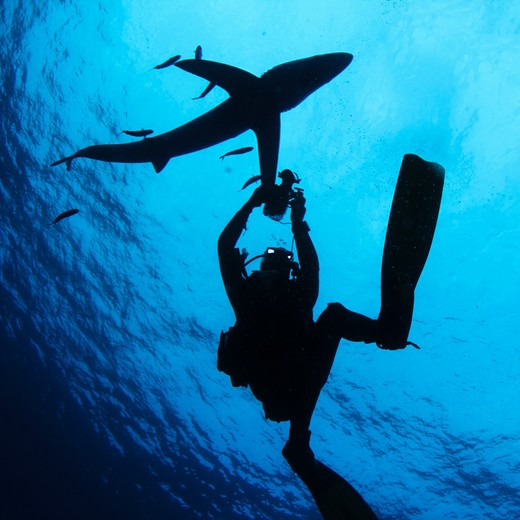 Stock Photo: 4284-1020 Scuba diver underwater photographing a Blue shark (Prionace glauca)