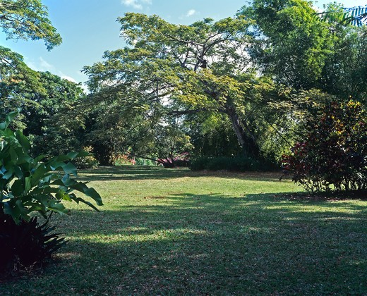 TREES AND LAWN IN A TROPICAL GARDEN GUADELOUPE FRENCH WEST INDIES : Stock Photo