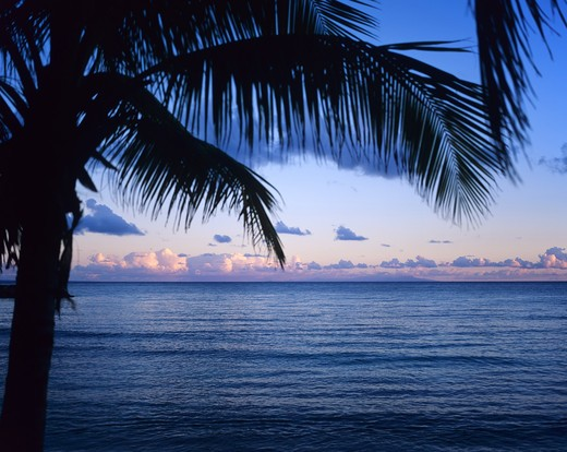 PALM TREE AND SEA AFTER SUNSET GUADELOUPE FRENCH WEST INDIES : Stock Photo