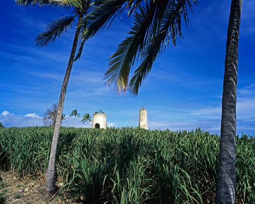 Stock Photo: 4285-10150 SUGAR CANE FIELD PALM TREES AND RUIN OF A WINDMILL GUADELOUPE FRENCH WEST INDIES