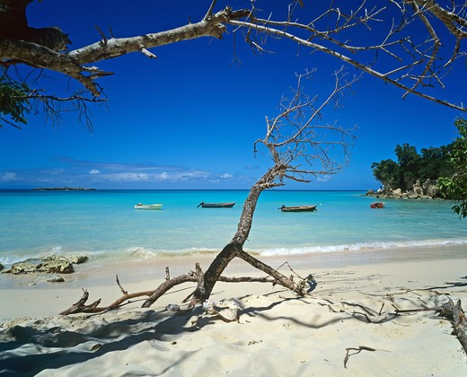 DEAD TREES ON A TROPICAL BEACH SEA AND FISHING BOATS GUADELOUPE FRENCH WEST INDIES : Stock Photo